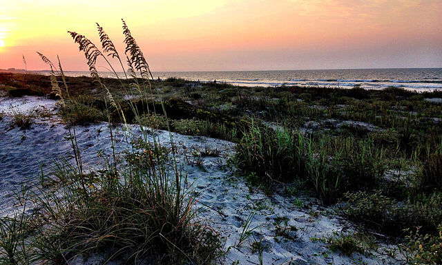 sand dunes from Kiawah Island in SC